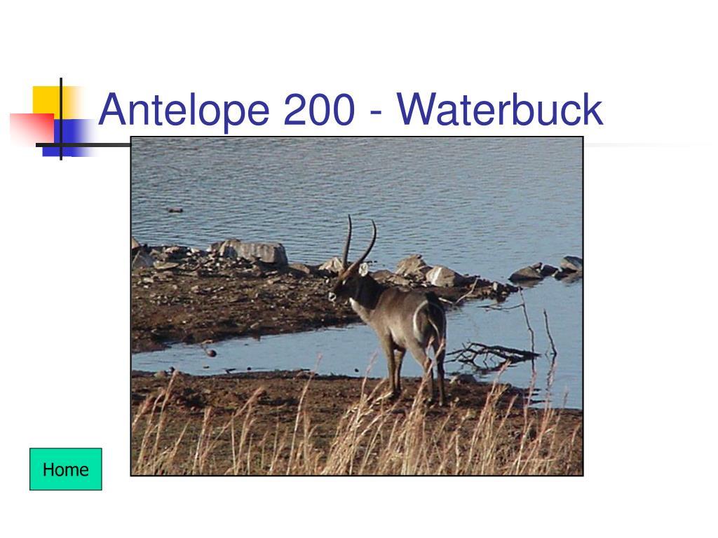 Antelope 200 - Waterbuck