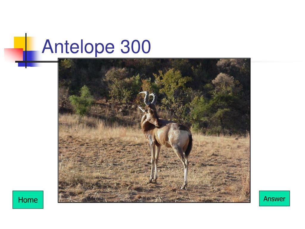 Antelope 300
