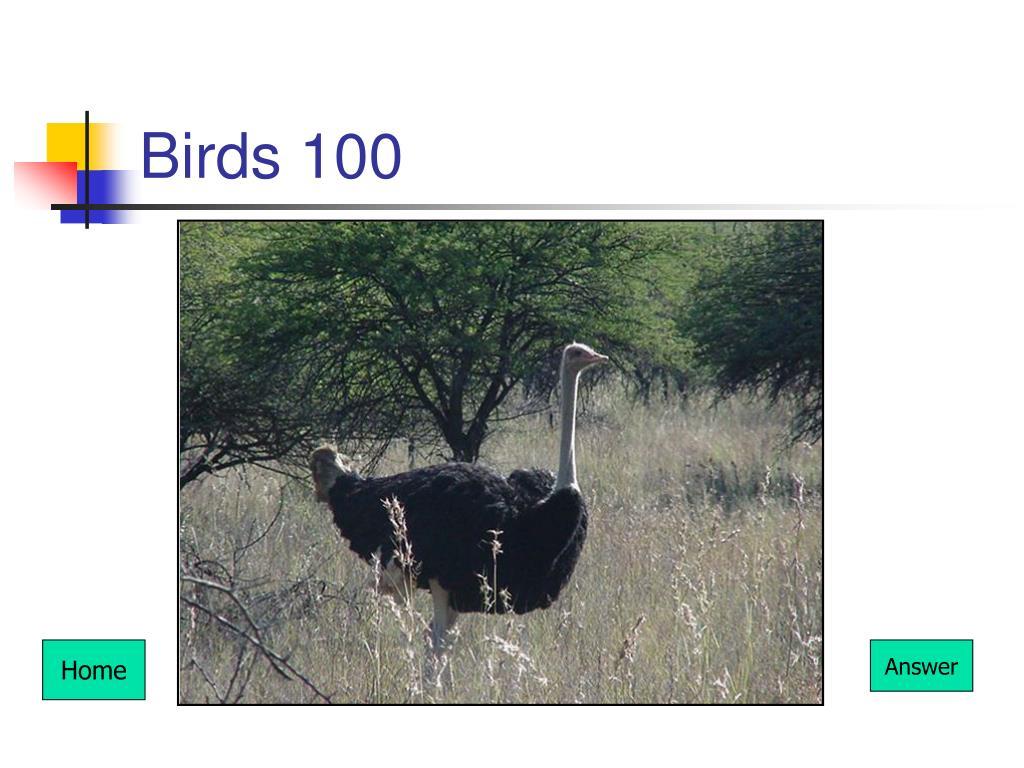 Birds 100