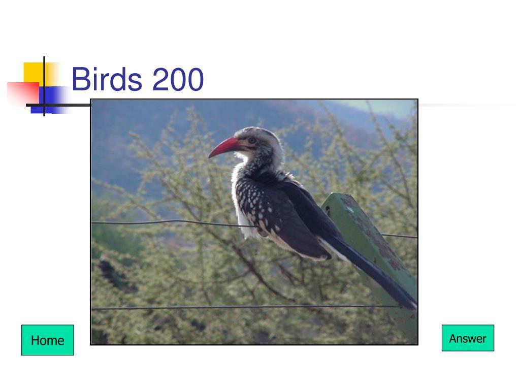 Birds 200