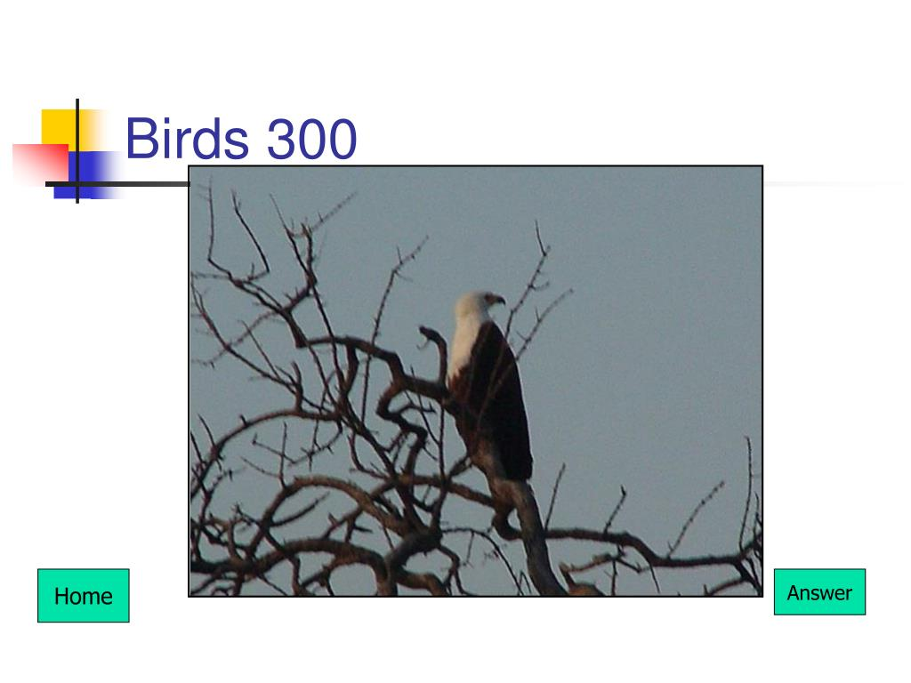 Birds 300