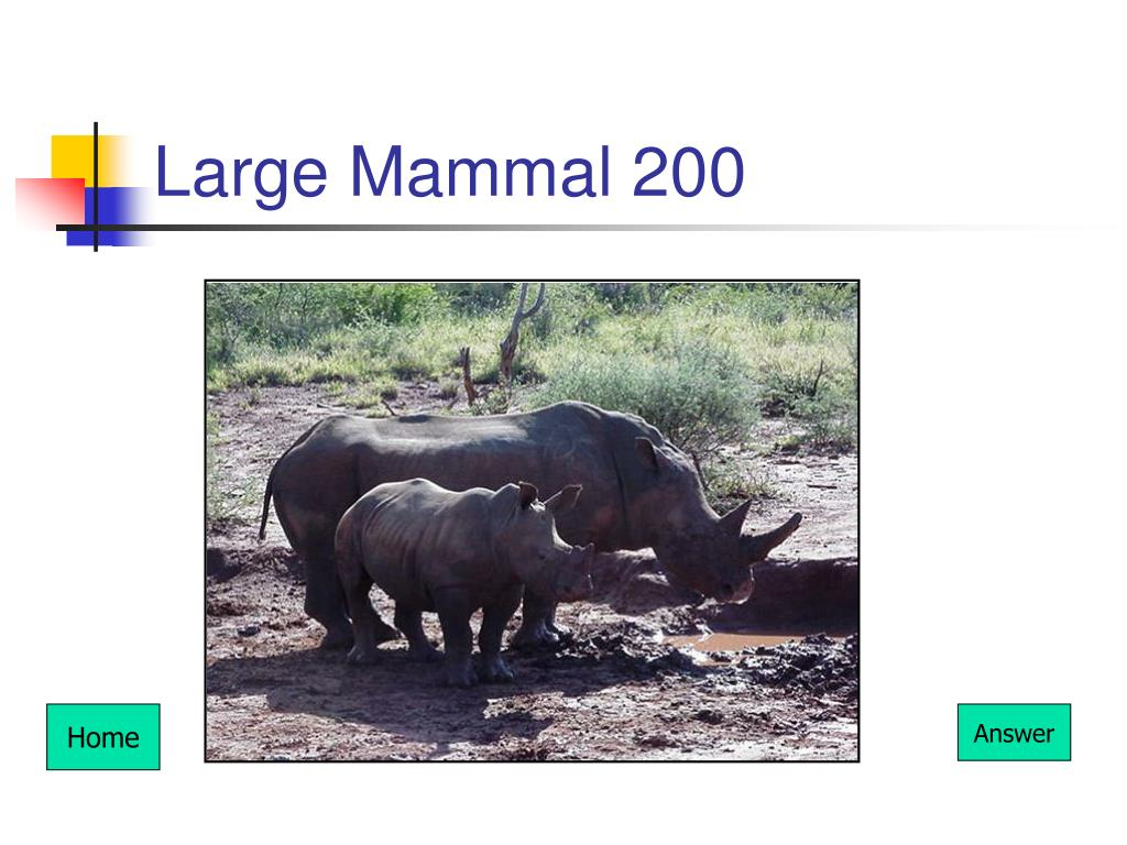 Large Mammal 200