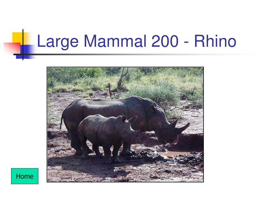 Large Mammal 200 - Rhino