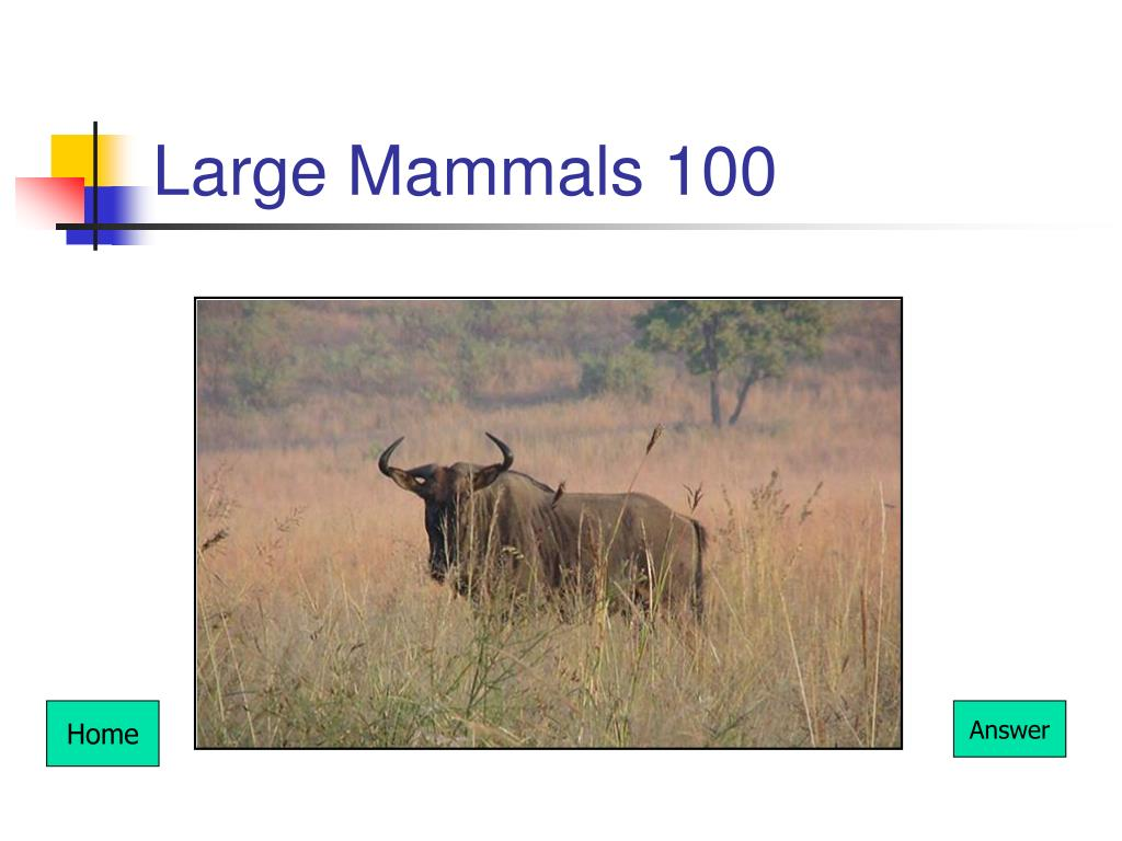 Large Mammals 100