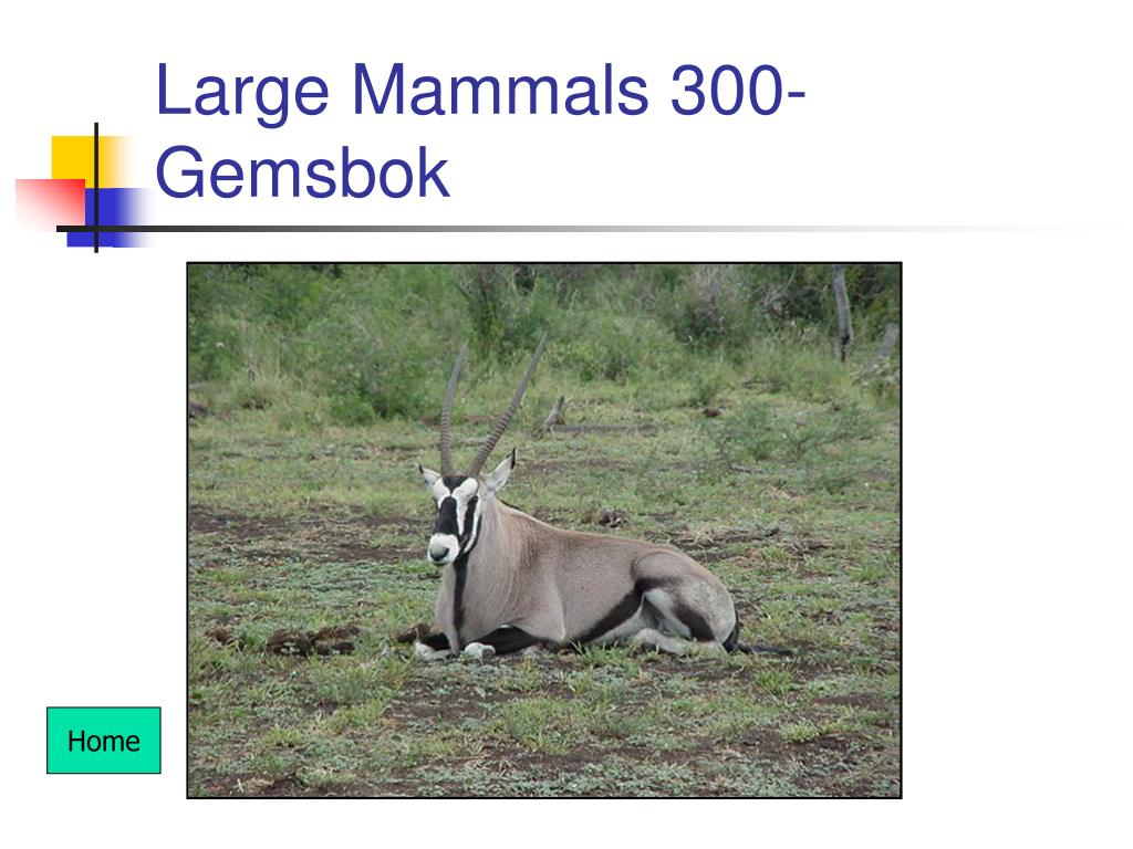 Large Mammals 300- Gemsbok