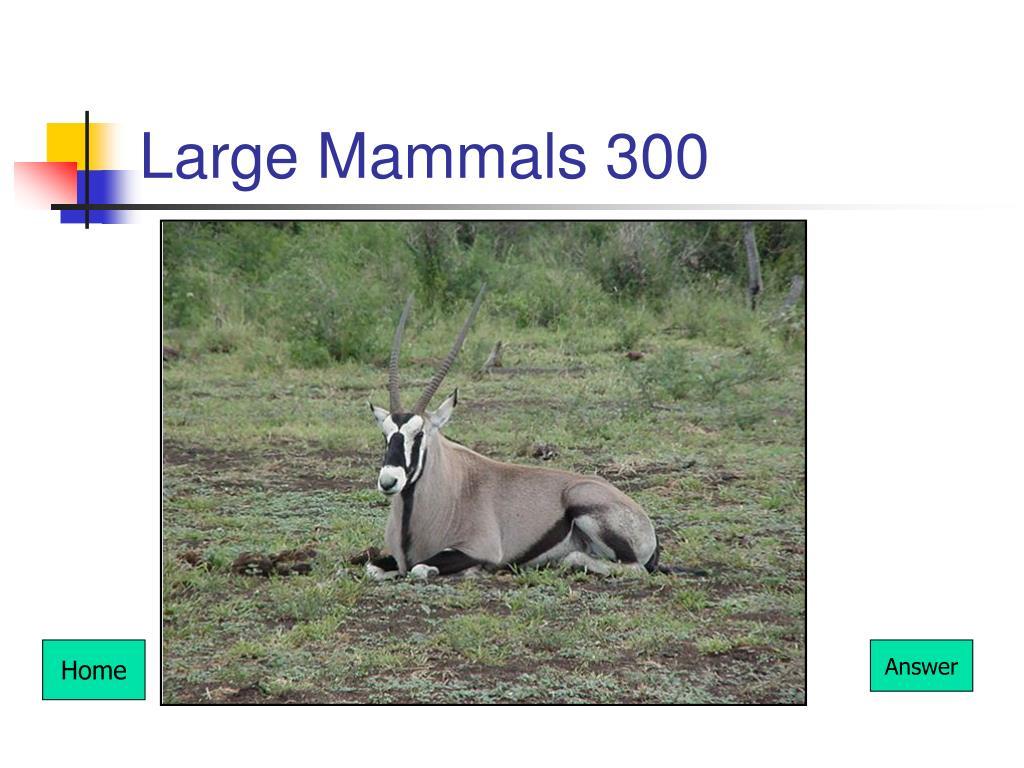 Large Mammals 300