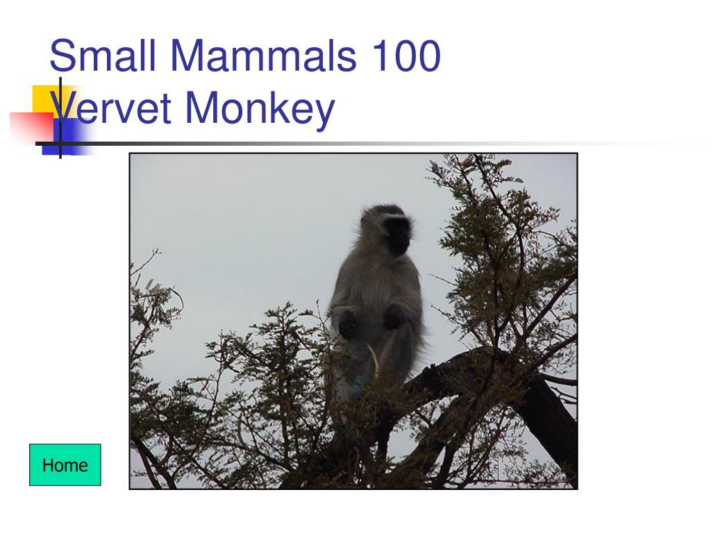 Small Mammals 100