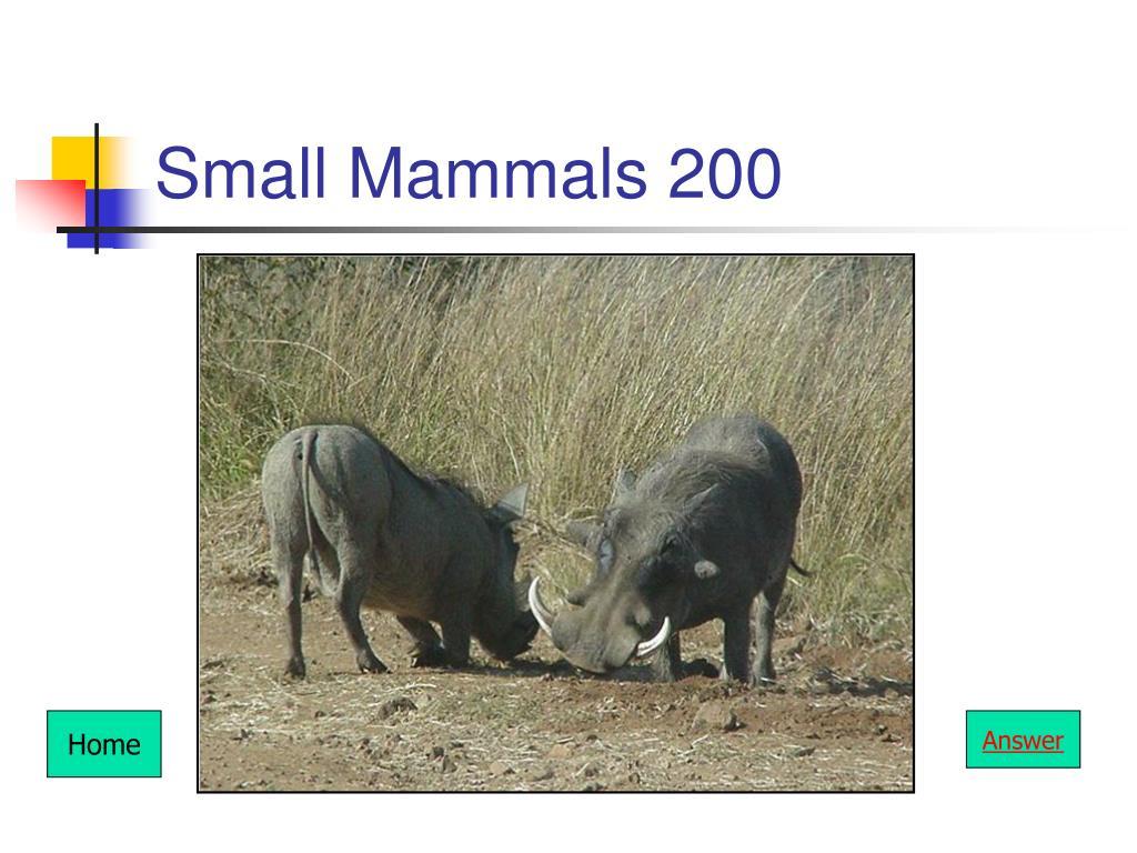 Small Mammals 200