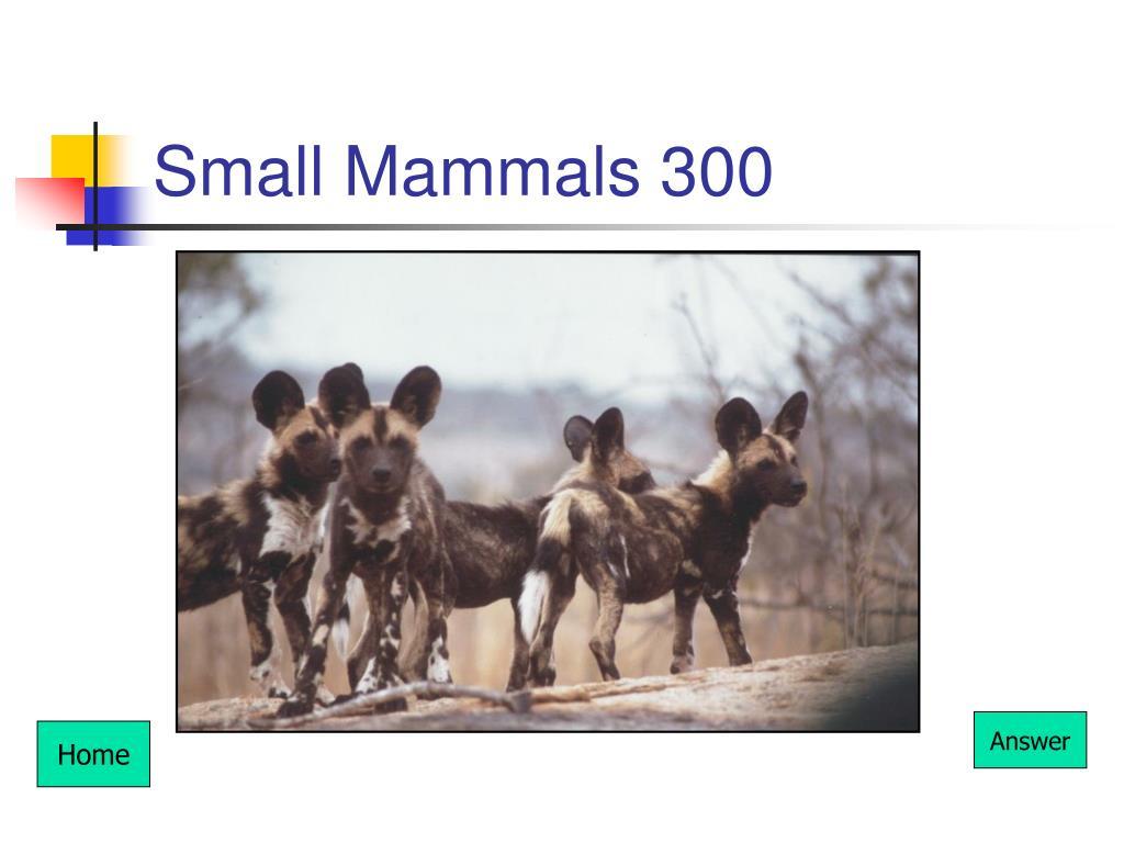 Small Mammals 300