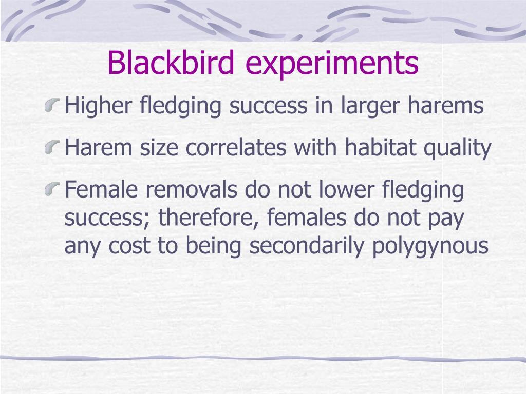 Blackbird experiments
