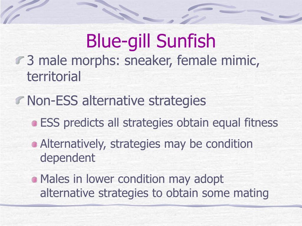 Blue-gill Sunfish