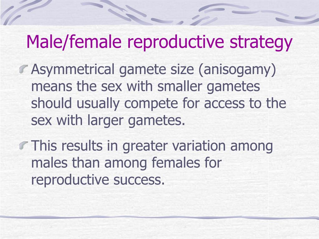 Male/female reproductive strategy