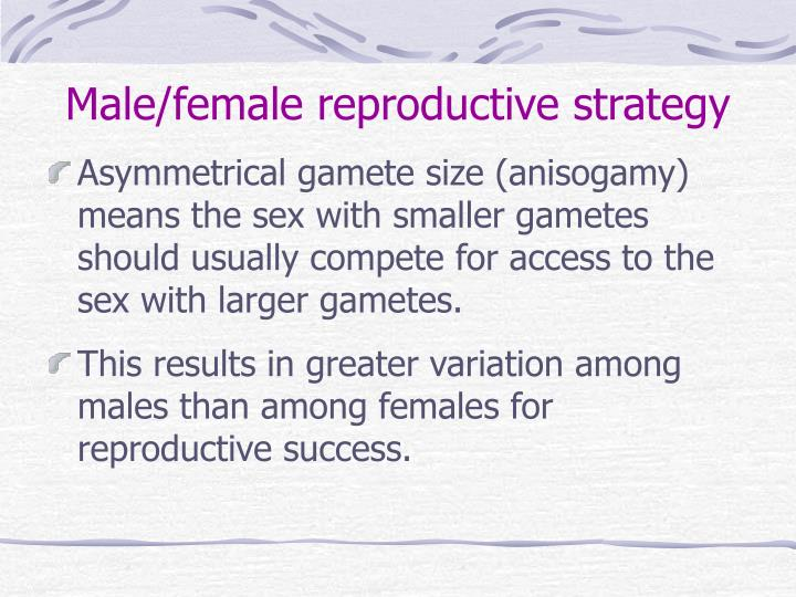 Male female reproductive strategy