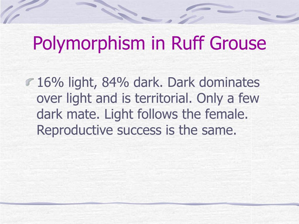 Polymorphism in Ruff Grouse