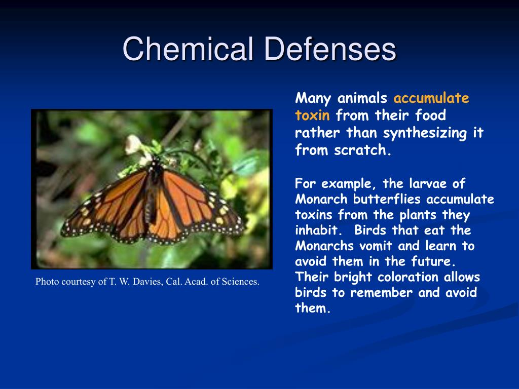 Chemical Defenses