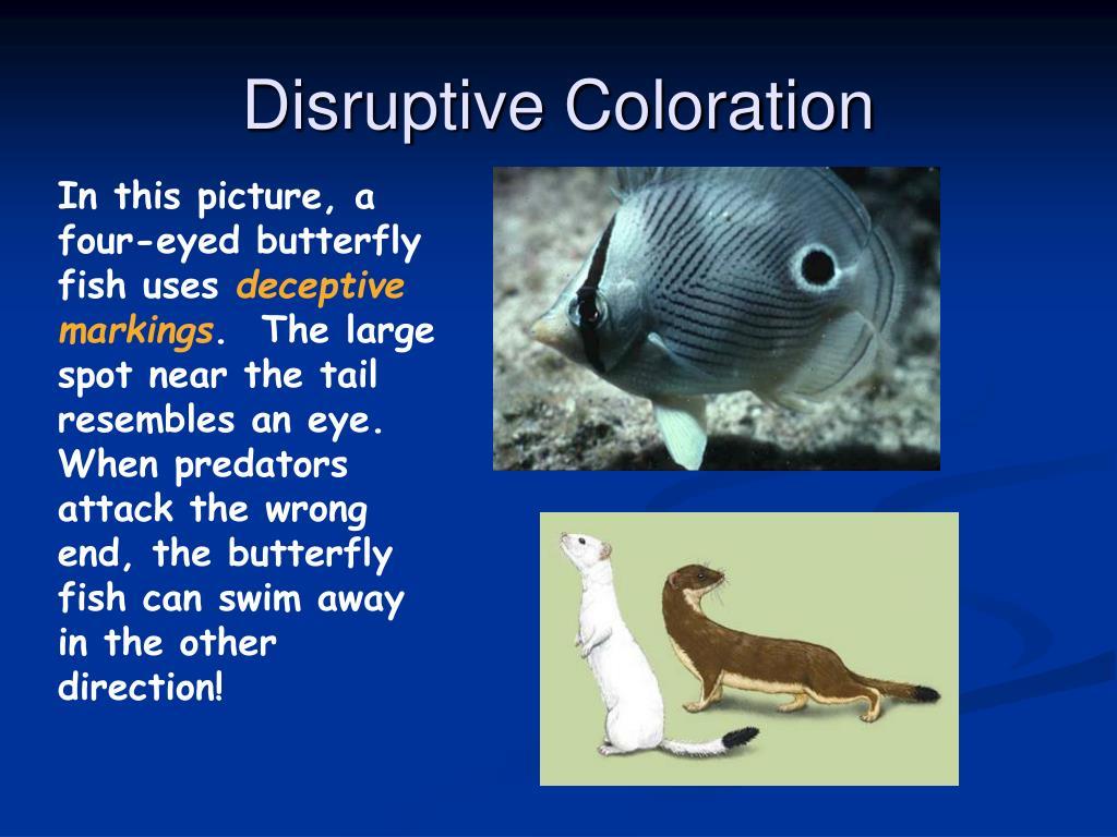 Disruptive Coloration