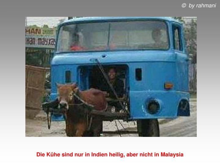 Die Kühe sind nur in Indien heilig, aber nicht in Malaysia