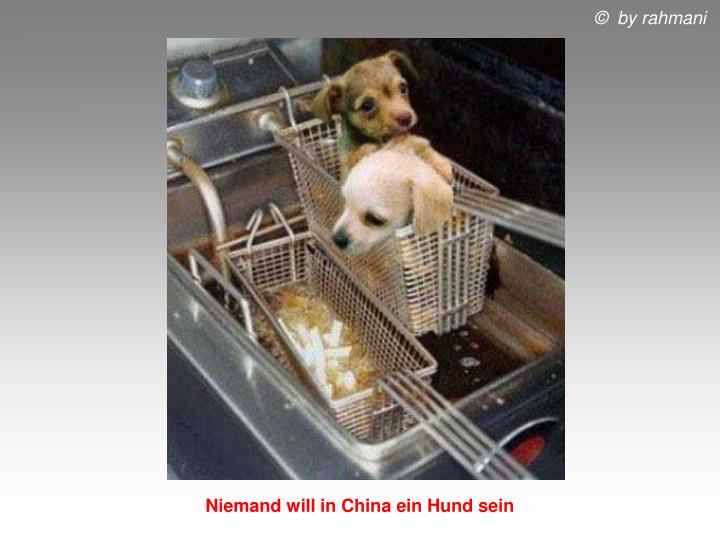 Niemand will in China ein Hund sein
