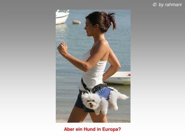 Aber ein Hund in Europa?