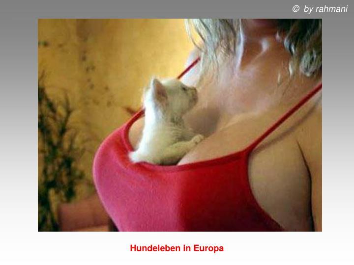 Hundeleben in Europa