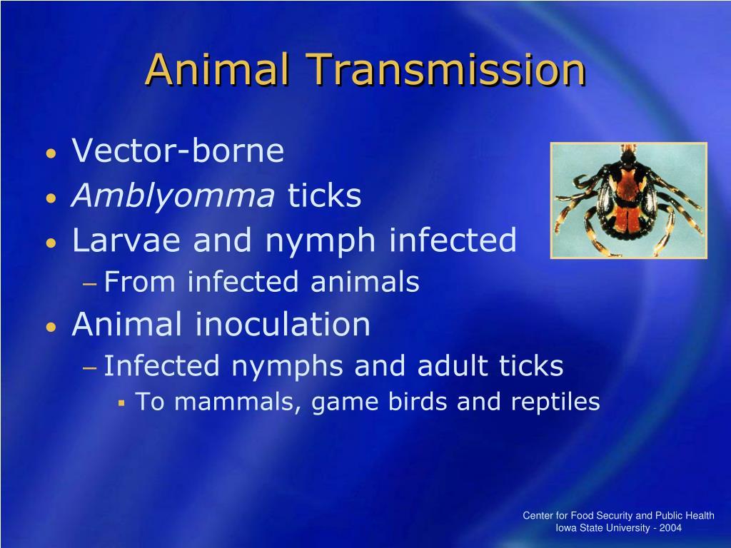 Animal Transmission