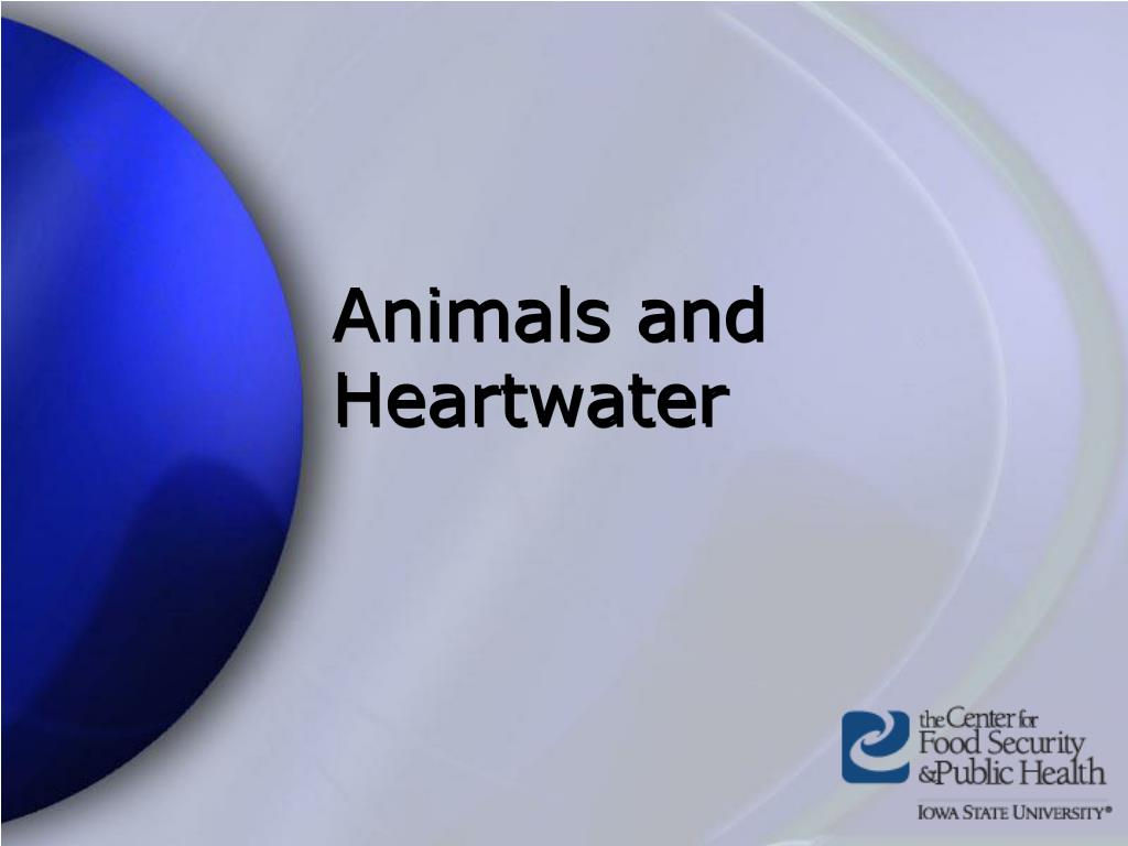 Animals and Heartwater