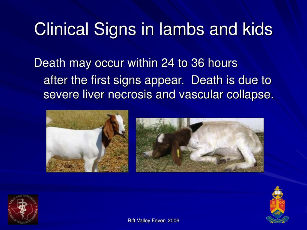 Clinical Signs in lambs and kids