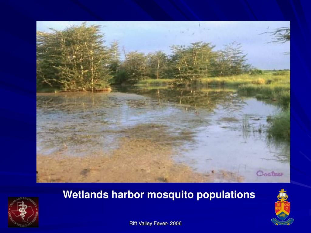 Wetlands harbor mosquito populations