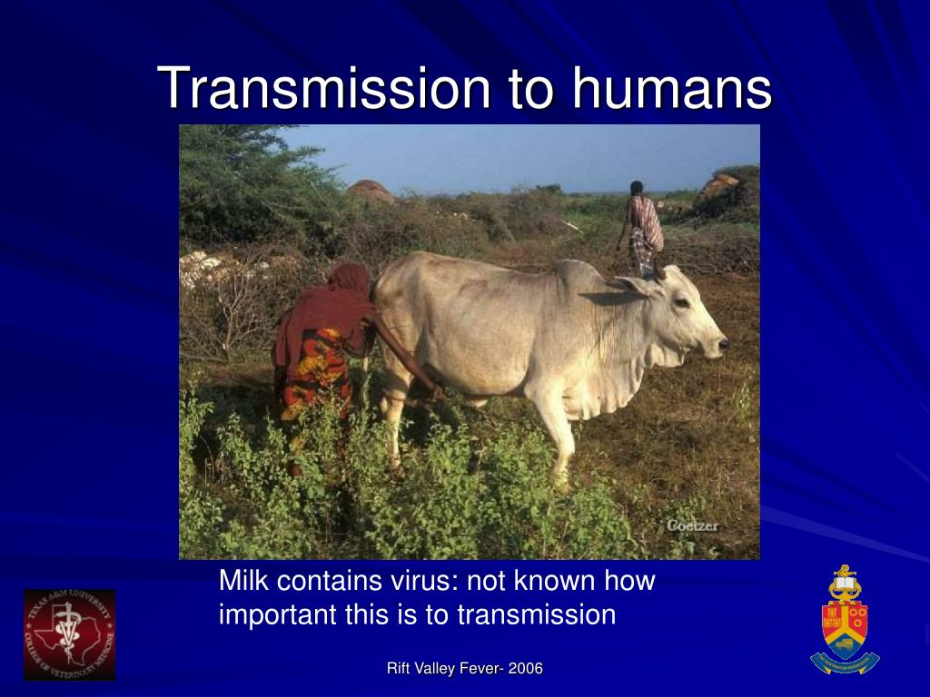 Transmission to humans