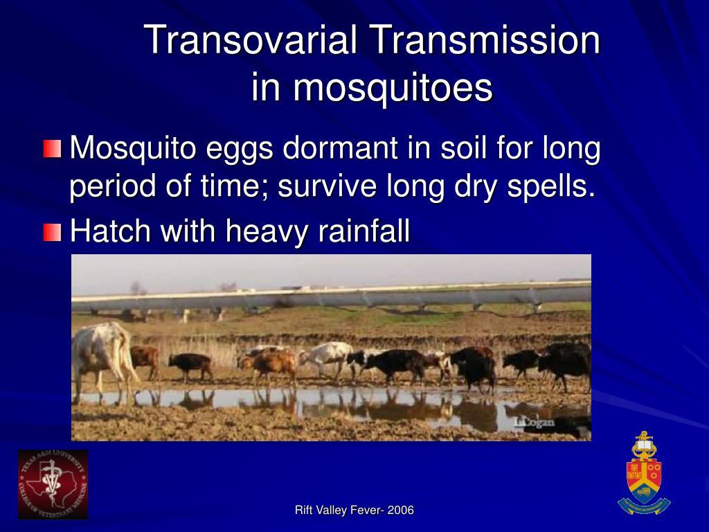 Transovarial Transmission