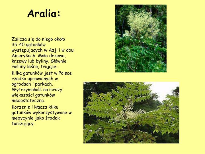 Aralia: