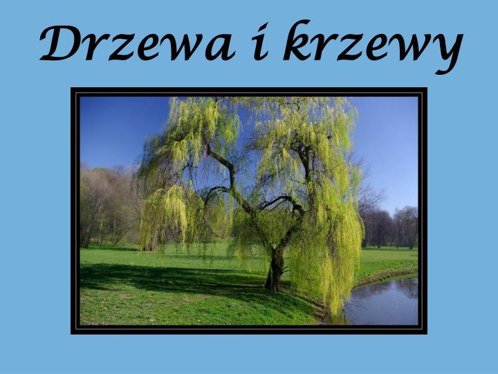 Drzewa i krzewy