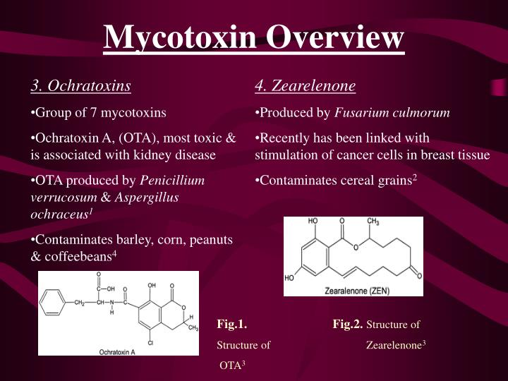 Mycotoxin Overview