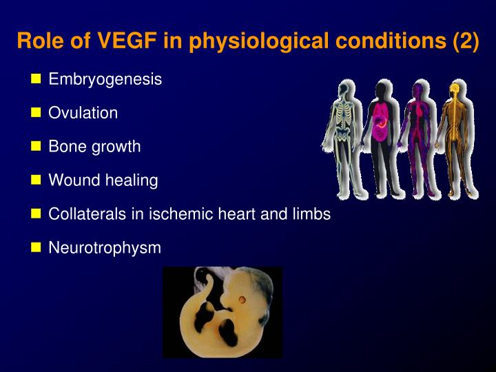 Role of VEGF in physiological conditions (2)