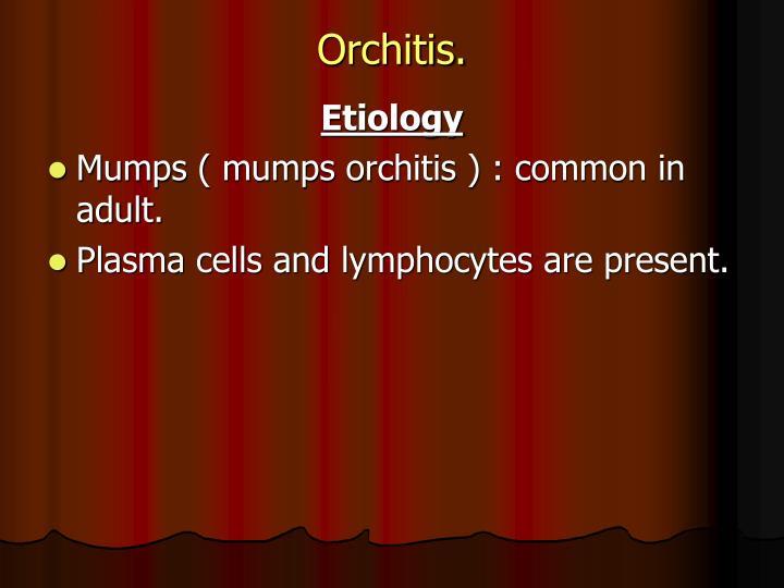 Orchitis.