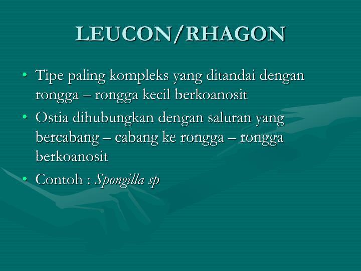 LEUCON/RHAGON