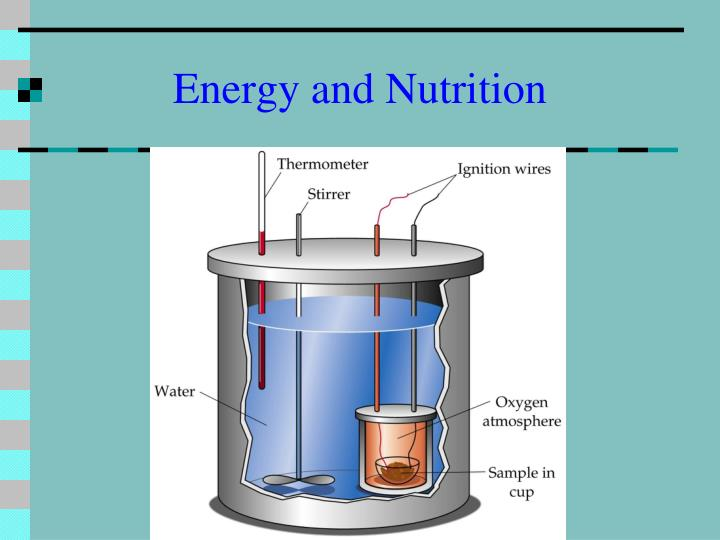 Energy and Nutrition