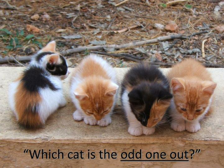"""Which cat is the"