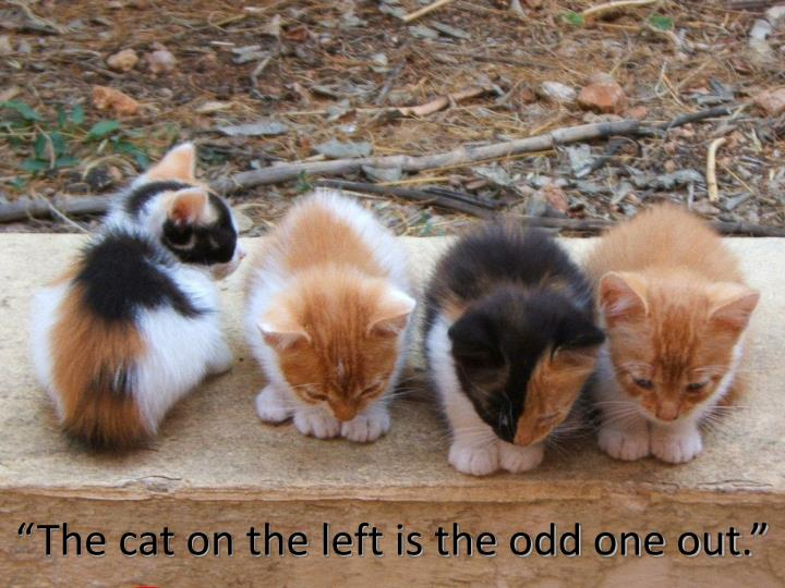 """The cat on the left is the odd one out."""