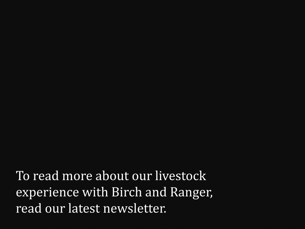 To read more about our livestock experience with Birch and Ranger, read our latest newsletter.