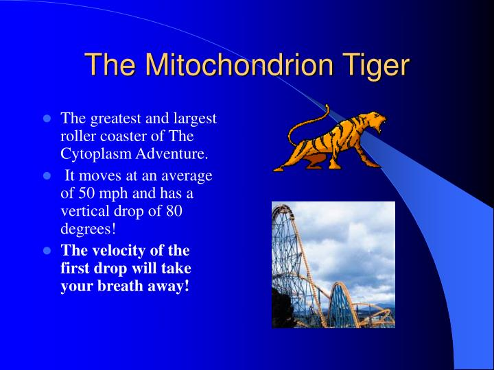 The mitochondrion tiger