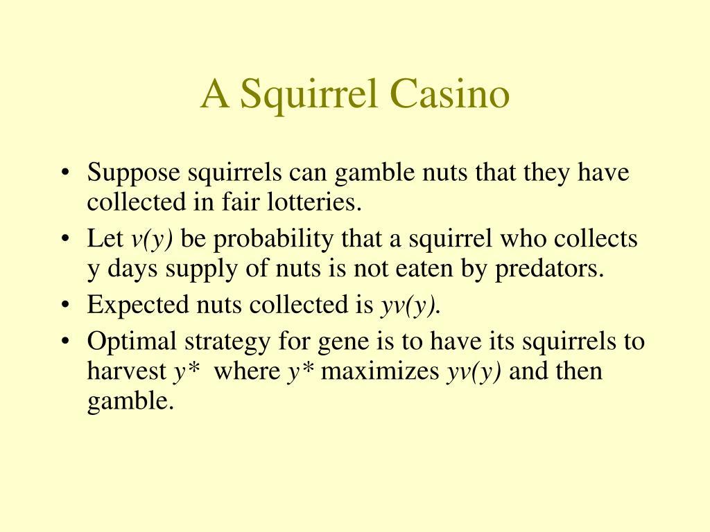 A Squirrel Casino