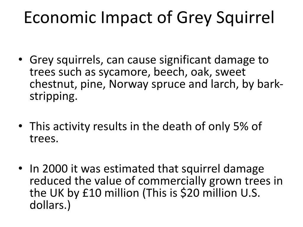 Economic Impact of Grey Squirrel