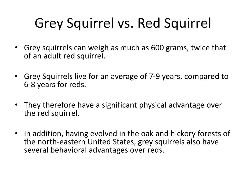 Grey Squirrel vs. Red Squirrel