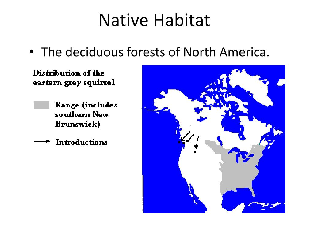 Native Habitat