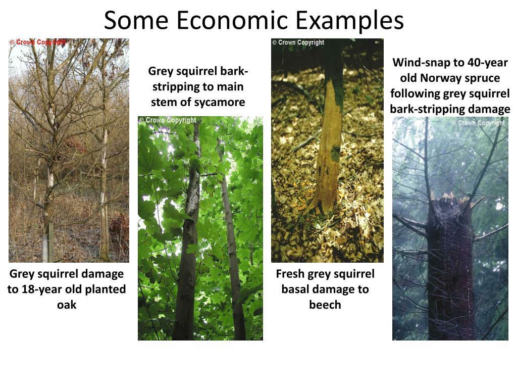 Some Economic Examples