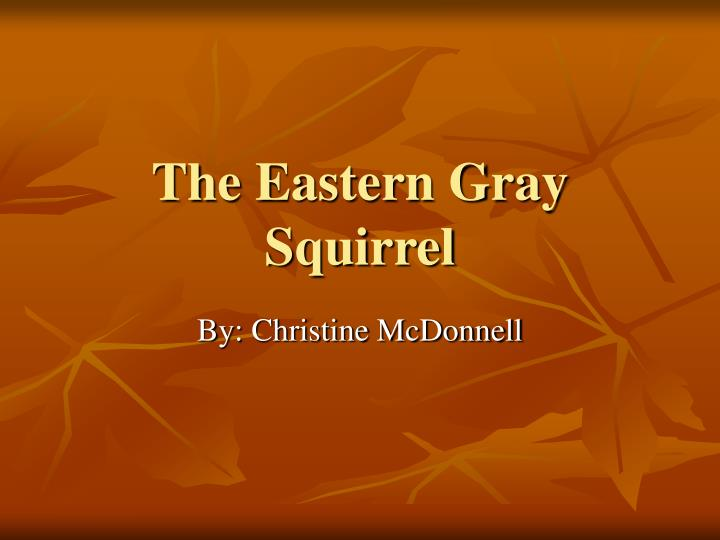 The eastern gray squirrel l.jpg