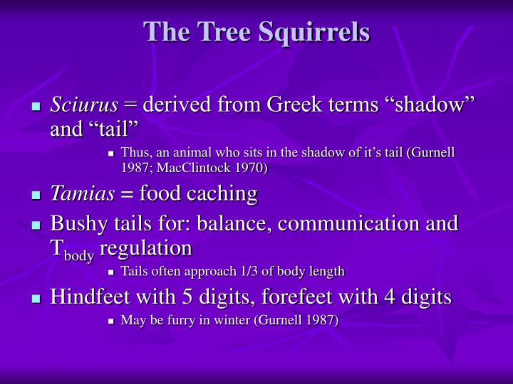 The tree squirrels