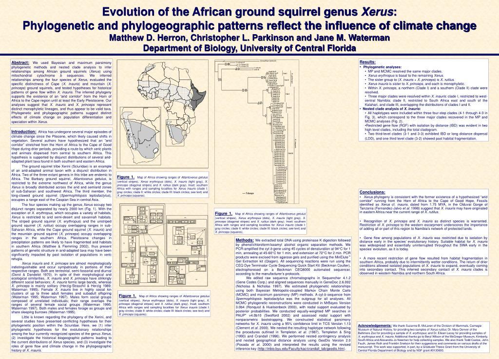 Evolution of the African ground squirrel genus