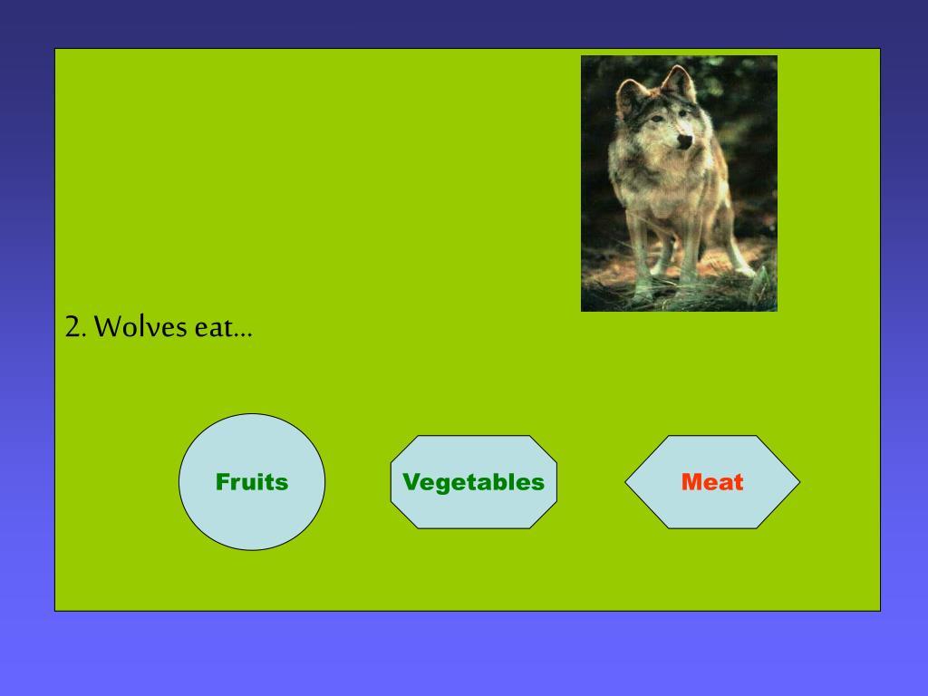 2. Wolves eat…